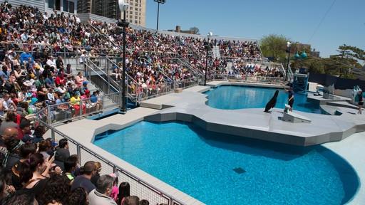 Coney Island & NY Aquarium 2021