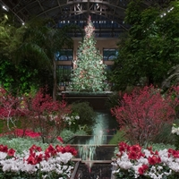 Longwood Gardens at Christmas